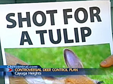 Shot for a Tulip